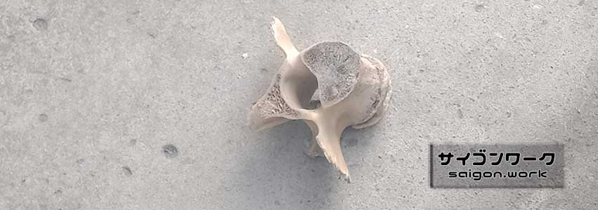路上の骨 | サイゴンワーク
