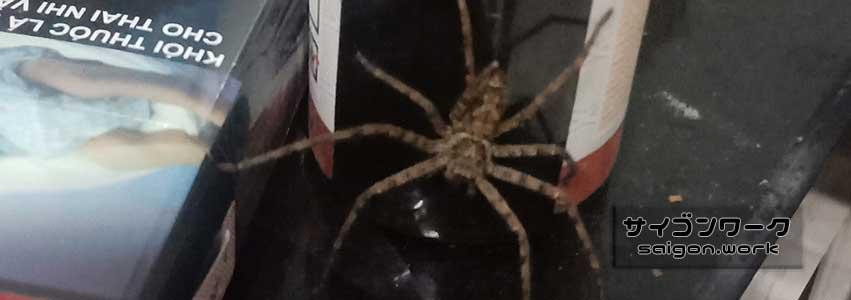蜘蛛 | サイゴンワーク